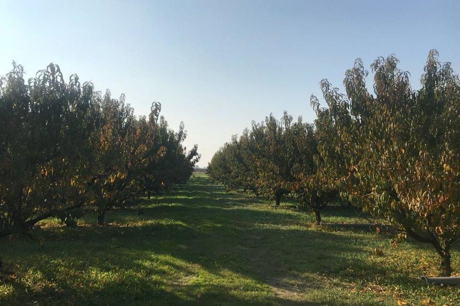 fotografie - terreno agricolo Bagnacavallo (RA)