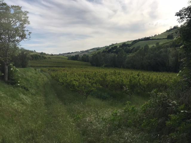 fotografie - terreno agricolo Faenza (RA) Campagna Monte